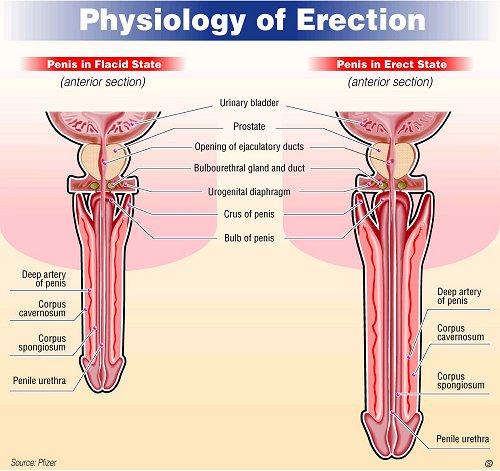 Female viagra information